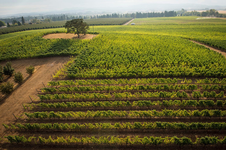 contact-eola-hills-wine-cellars & contact-eola-hills-wine-cellars - Eola Hills