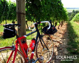 Bike in Vineyard